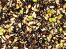 Abba Soaked Seed Mix